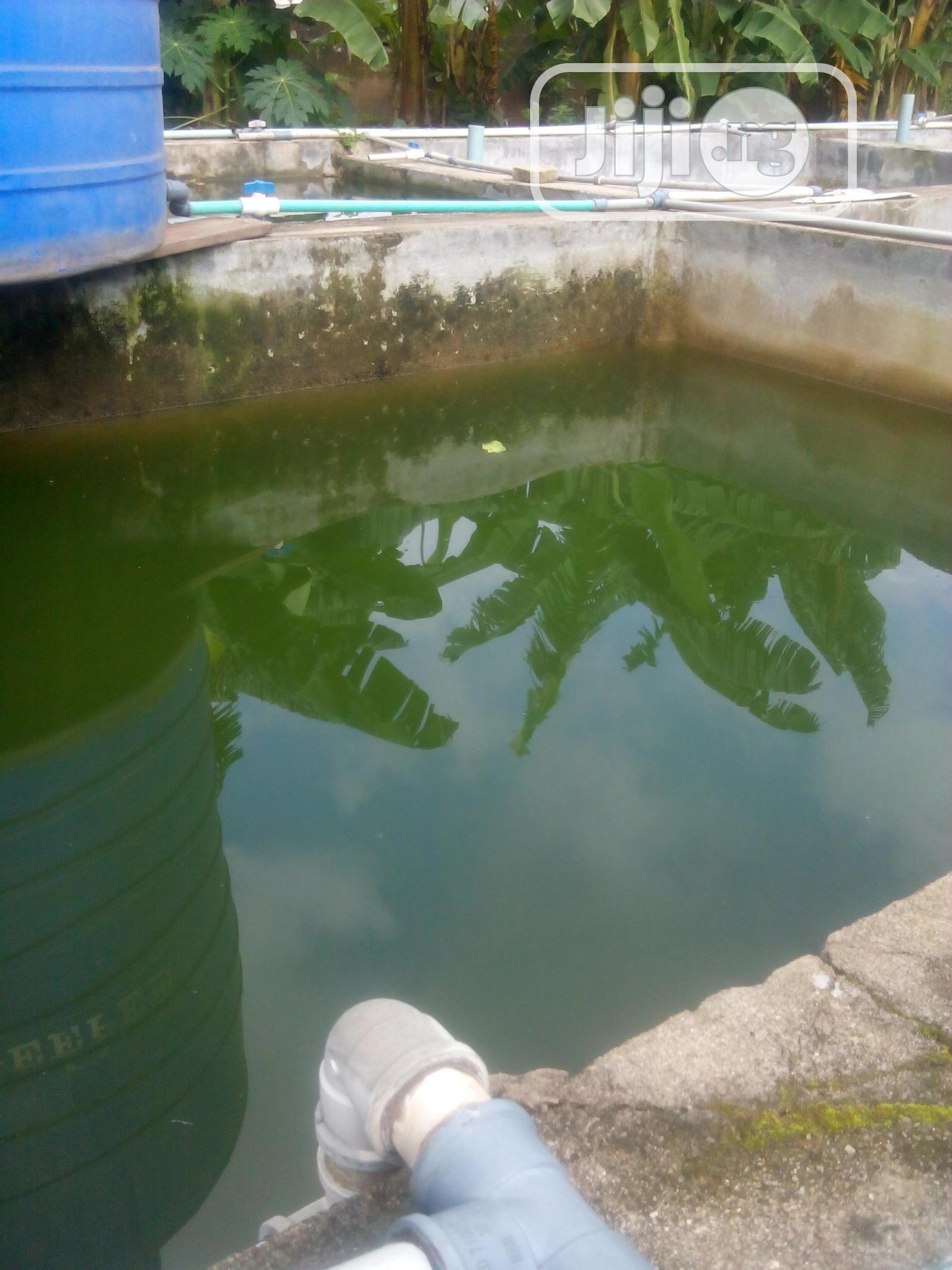 Fish Farm-11 Fish Ponds For Rent At Akute Off Ojodu/Berger | Farm Machinery & Equipment for sale in Ifo, Ogun State, Nigeria