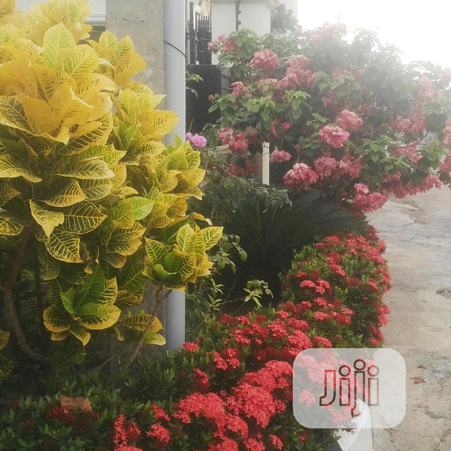 Flower Pots For Indoors And Outdoors Plants | Garden for sale in Wuse, Abuja (FCT) State, Nigeria