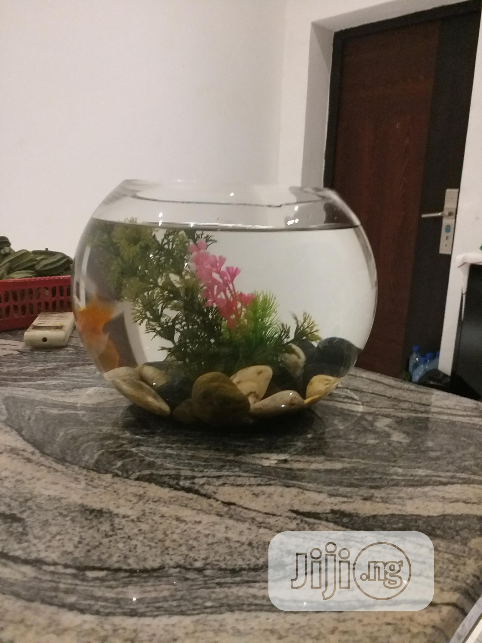 Archive: Aquarium Fish Bowl