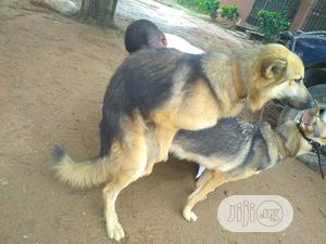 Crossing (Mating) | Pet Services for sale in Lagos State, Agege