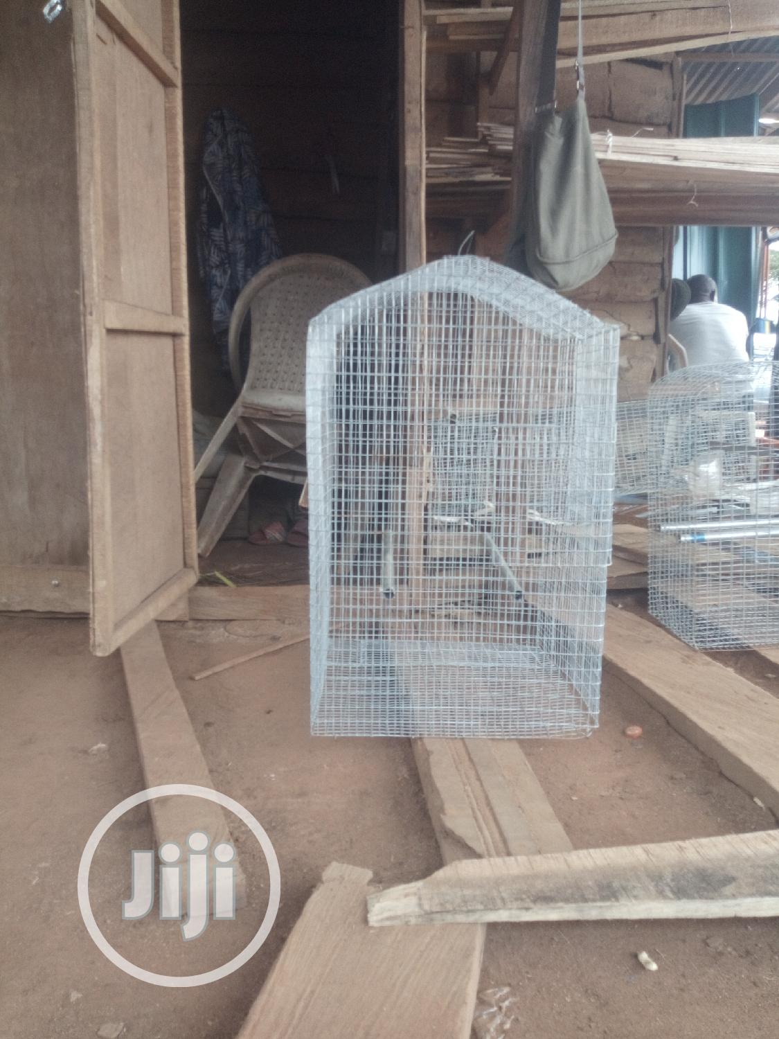 Parrots And Pigeon | Birds for sale in Ikorodu, Lagos State, Nigeria