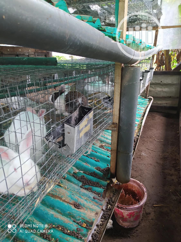 Organic Liquid Fertilizer and Insecticide