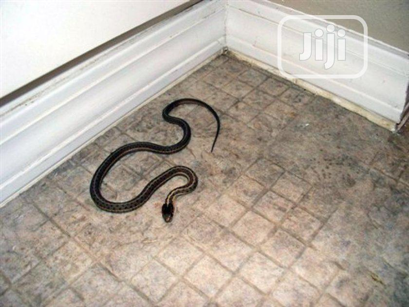 Experience Quality Snake Fumigation.