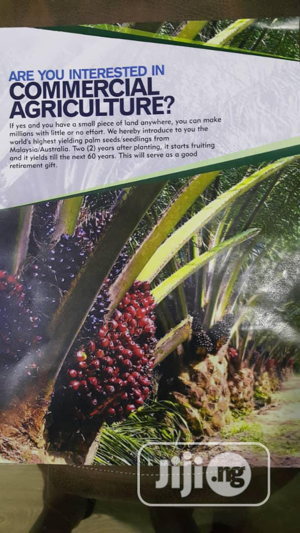 Archive: Malaysian Palm. 2 Years Fruiting