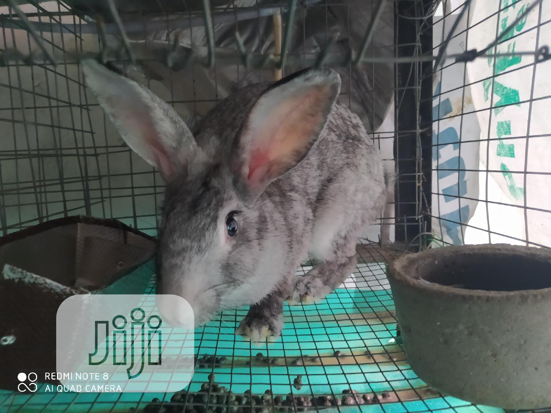 Archive: Rabbits/Bunnies