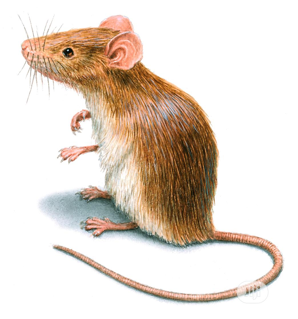 Attack the Rodents With Quality Fumigation Service