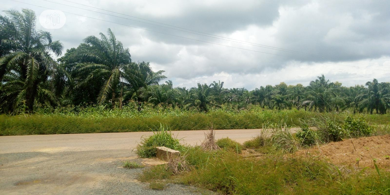 Farm Land in Ifite-Ogwari,We Also Help in Setting Up Ur Farm | Land & Plots For Sale for sale in Ayamelum, Anambra State, Nigeria