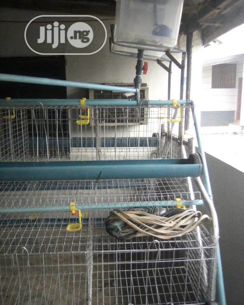 Galvanized Super Quality Battery Cage For Farmers