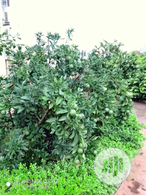 Archive: Garden Services