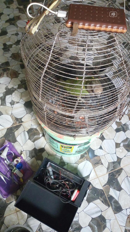 Archive: Cheap Parrots