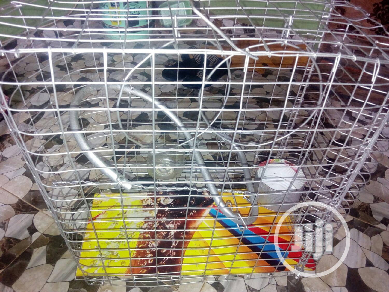 Archive: Parrots For Sale (Male/Female)