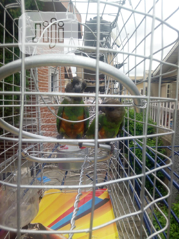 Archive: Parrots For Sale (Negotiable)