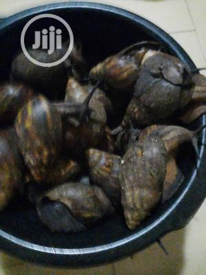 Snail Table Size Snail | Reptiles for sale in Lagos State, Apapa