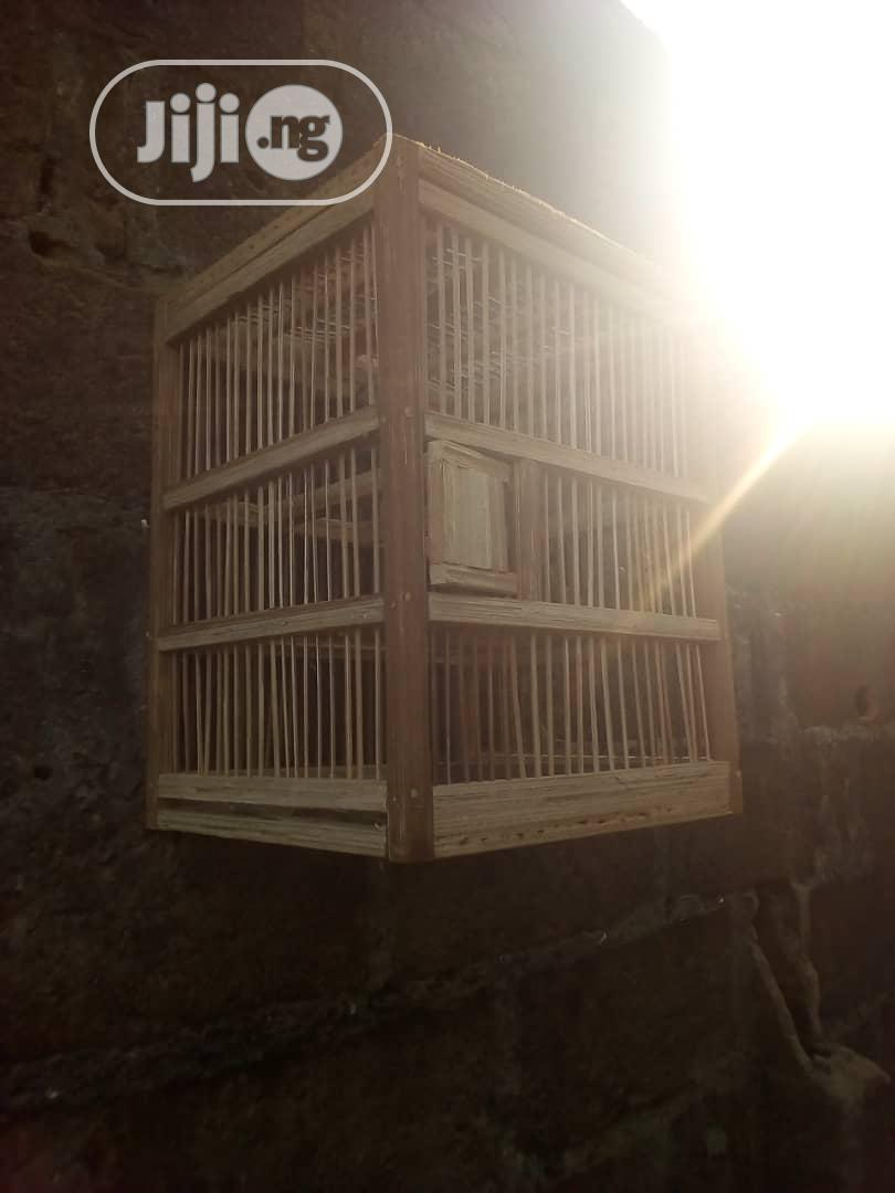 Pigeon And Cage | Birds for sale in Ikorodu, Lagos State, Nigeria