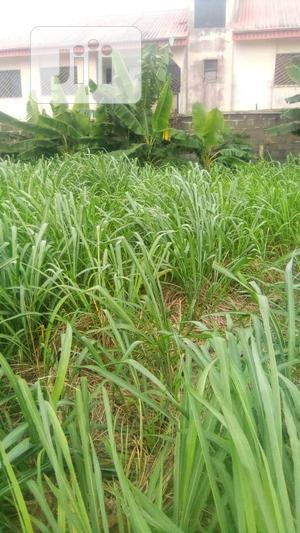 Genuine Land at Your Best Price (Location- Ozuoha-Omagwa-Ph) | Land & Plots For Sale for sale in Rivers State, Ikwerre