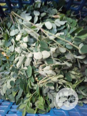 Moringa Leaves | Feeds, Supplements & Seeds for sale in Rivers State, Port-Harcourt