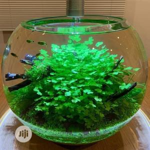Fish Bowl Kit | Fish for sale in Lagos State, Surulere