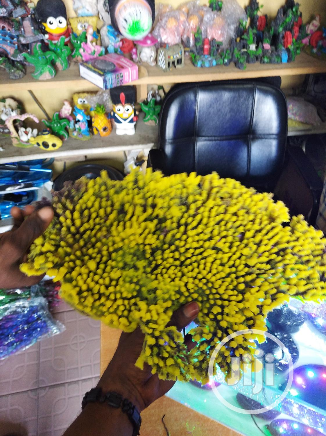 Dety Resistable Plant | Pet's Accessories for sale in Surulere, Lagos State, Nigeria