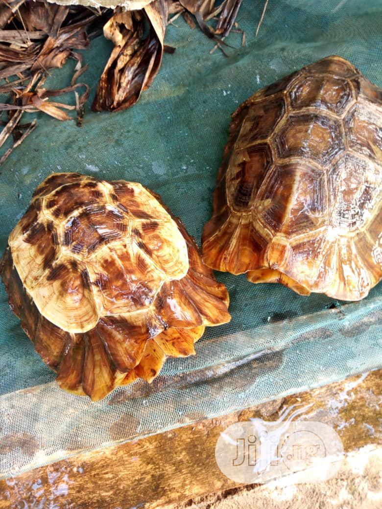 Turtle/Tortoise For Sale