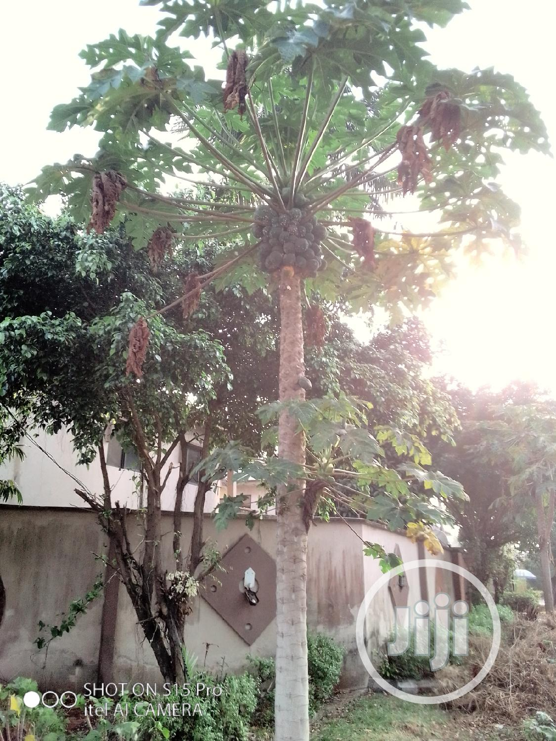 Archive: Garden Fruits Installation, Maintenance, And Treatment