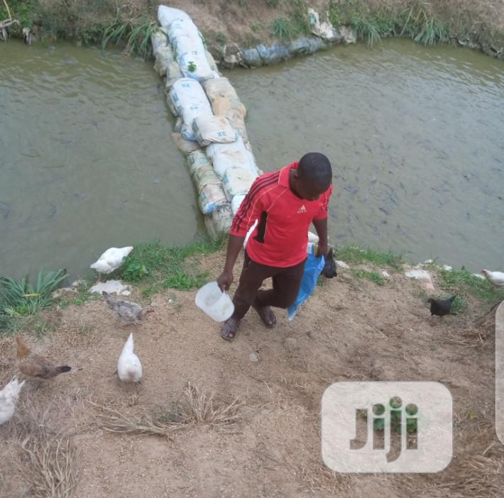 Earthen Pond