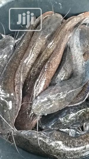 Well Cleaned Catfish For Sale   Livestock & Poultry for sale in Lagos State, Ajah
