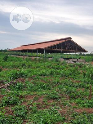 POULTRY Setup Builders And Consultants | Building & Trades Services for sale in Delta State, Warri