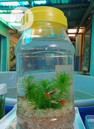 Bottle Aquarium | Fish for sale in Lagos State, Ipaja