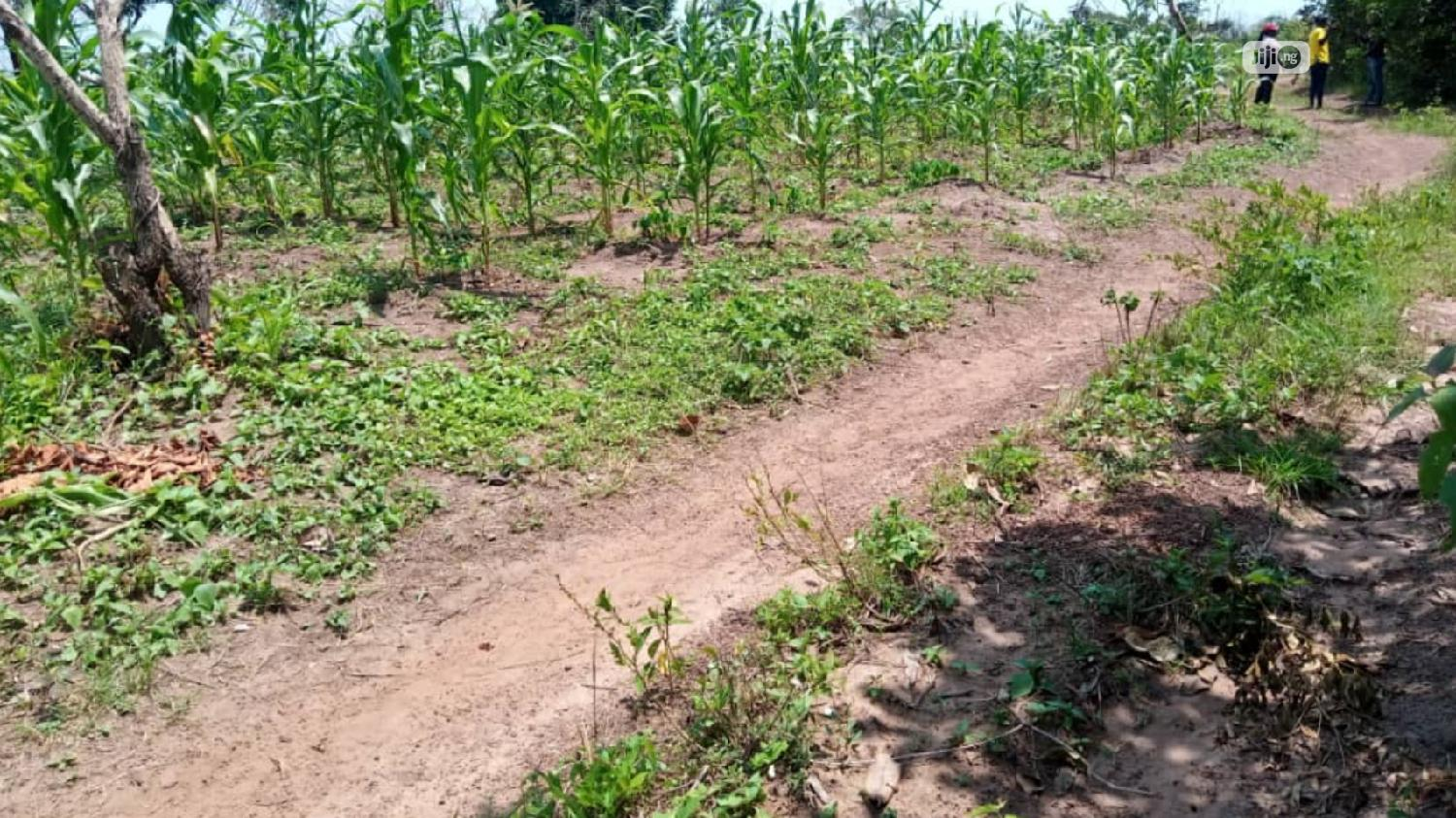 4000 Acres Of Land For Lease Owode Village Ipapo Town Itesi | Land & Plots for Rent for sale in Iseyin, Oyo State, Nigeria