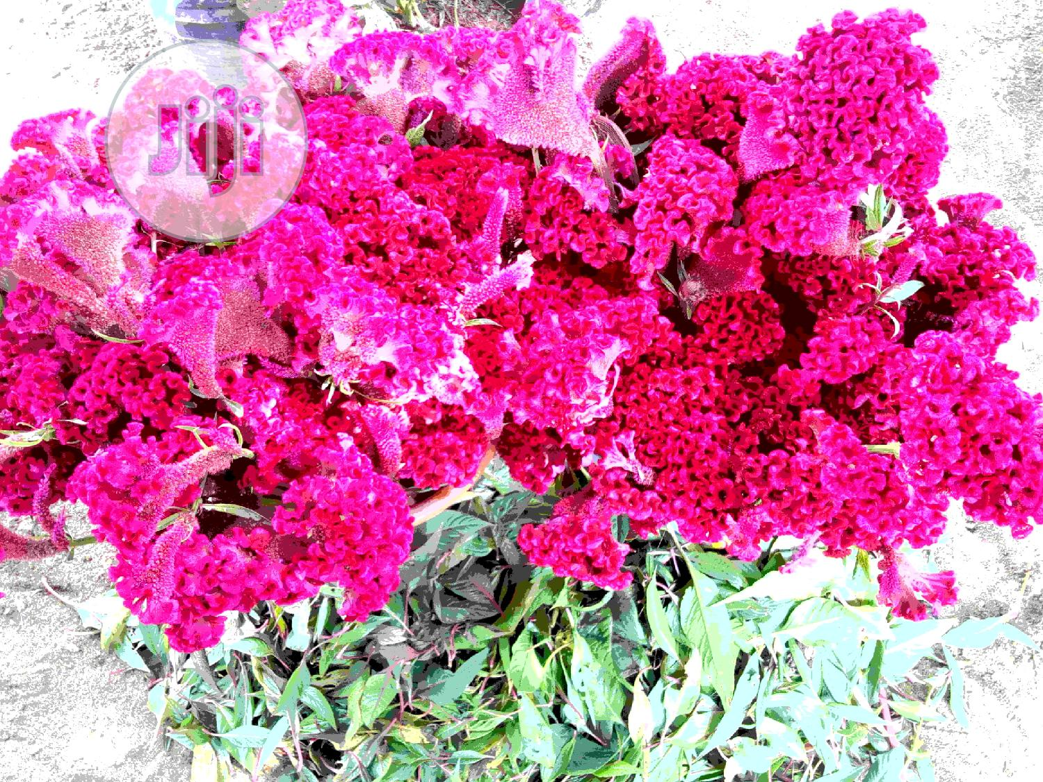 Cut Flowers | Landscaping & Gardening Services for sale in Ibeju, Lagos State, Nigeria