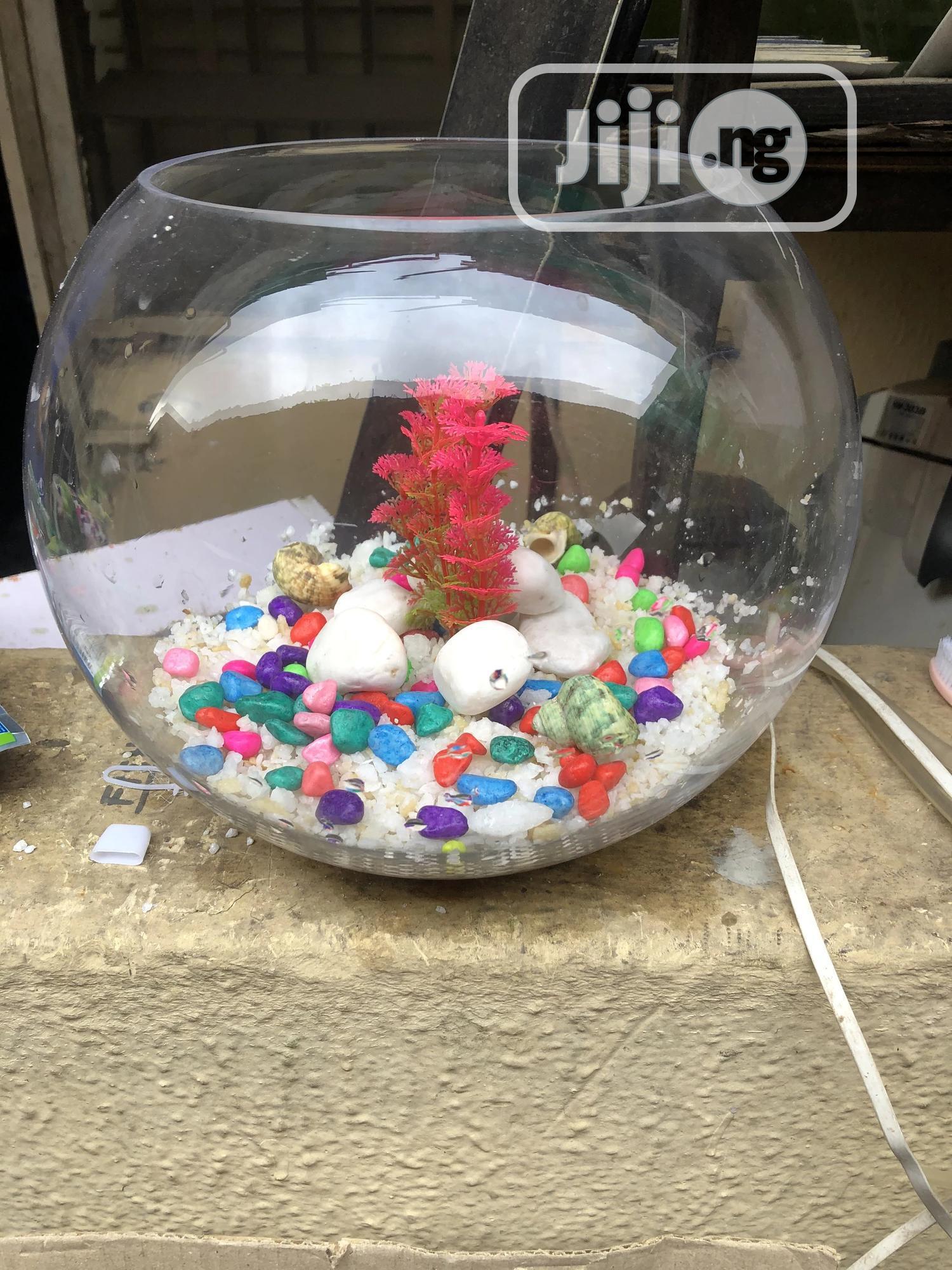 Archive: Mini Fish Bowl Aquarium