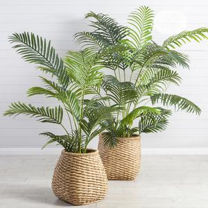 European Artificial Palm Plant   Garden for sale in Lagos State, Agege
