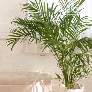Artificial European Palm Flower Plant   Garden for sale in Lagos State, Agege