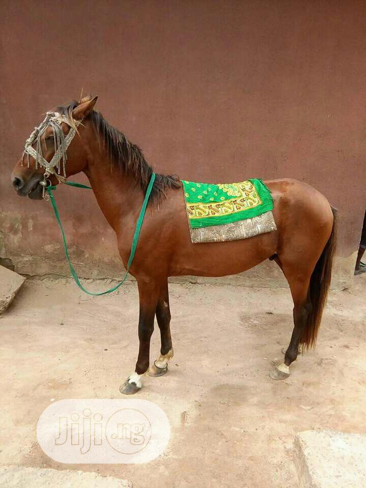 Archive: Female Horse For Sale