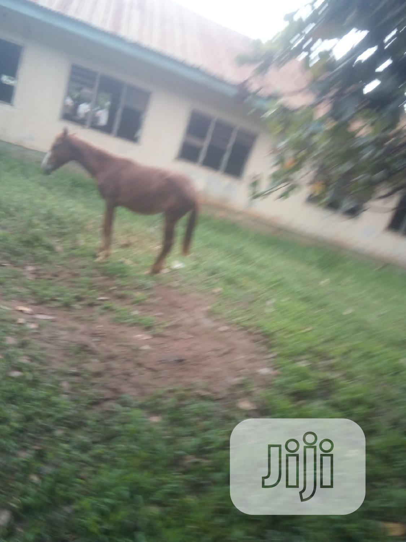 Archive: Female Pony