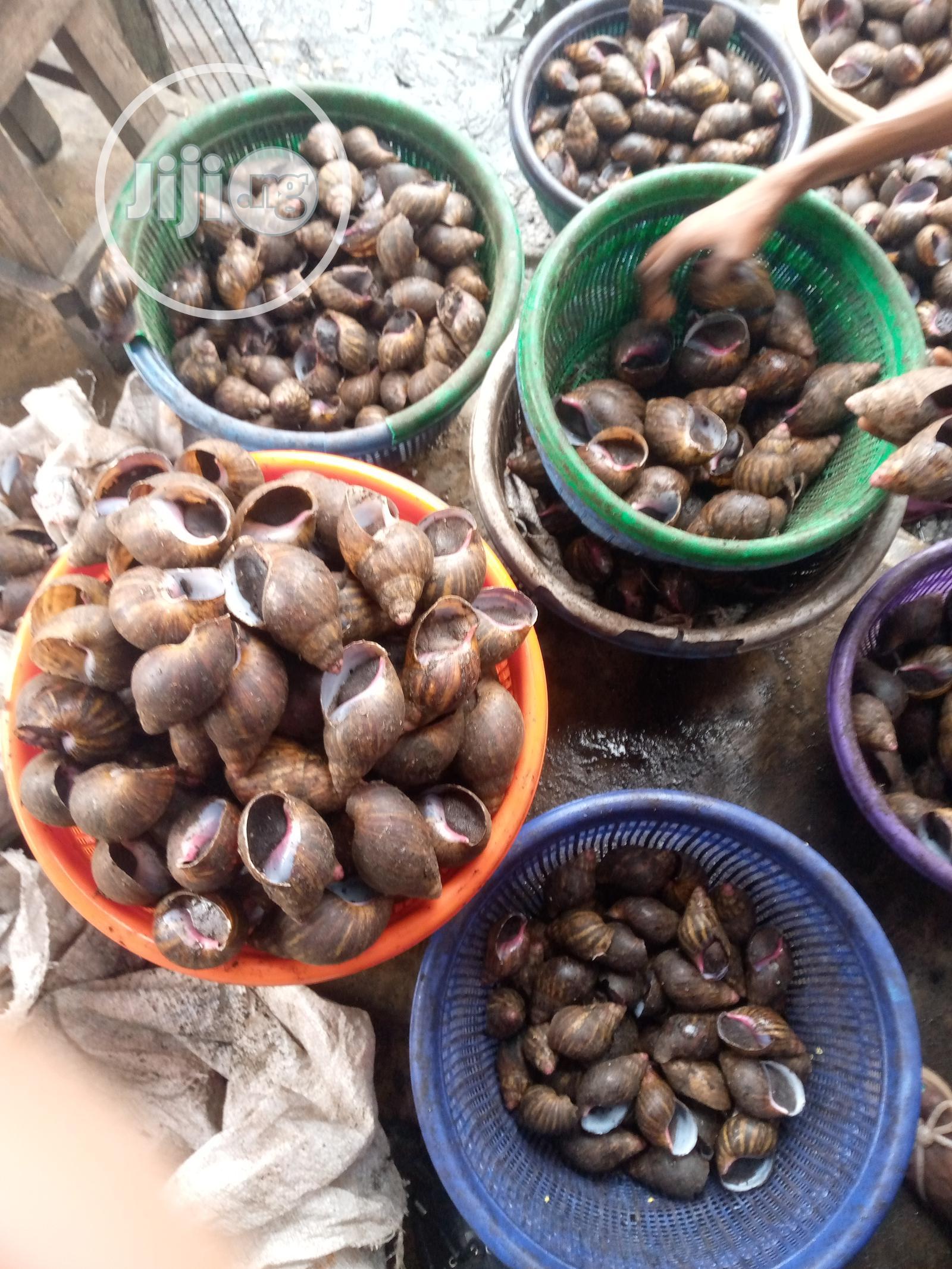 Snails Sales