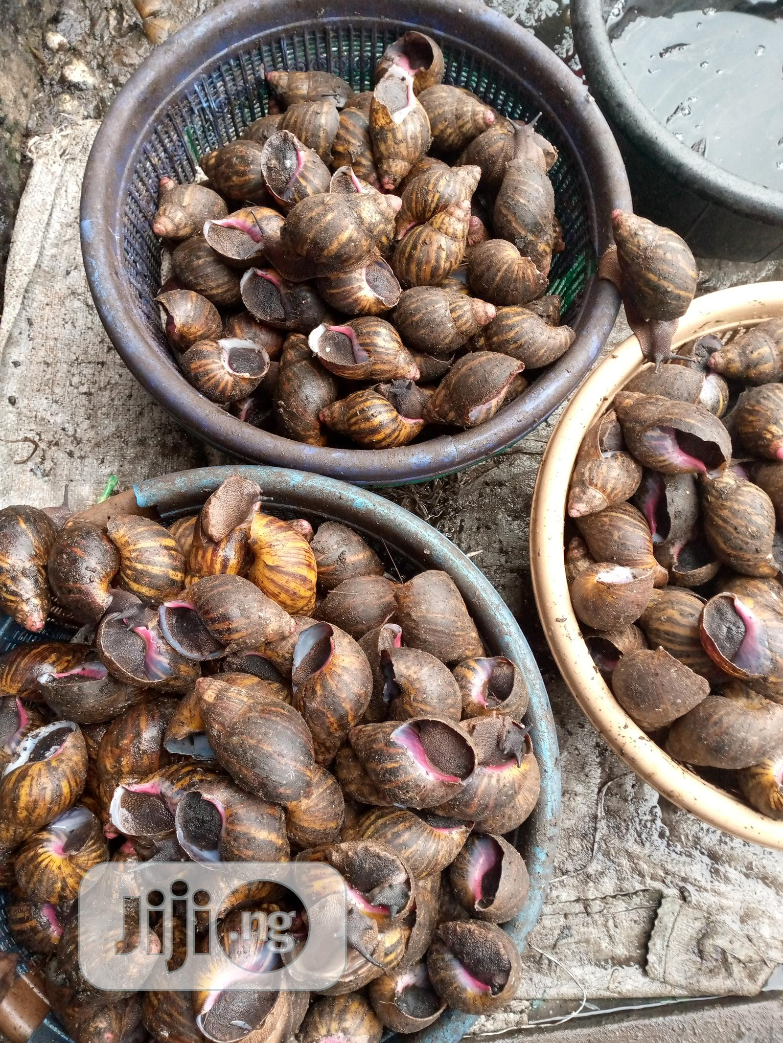 Cheap Snails   Other Animals for sale in Udu, Delta State, Nigeria