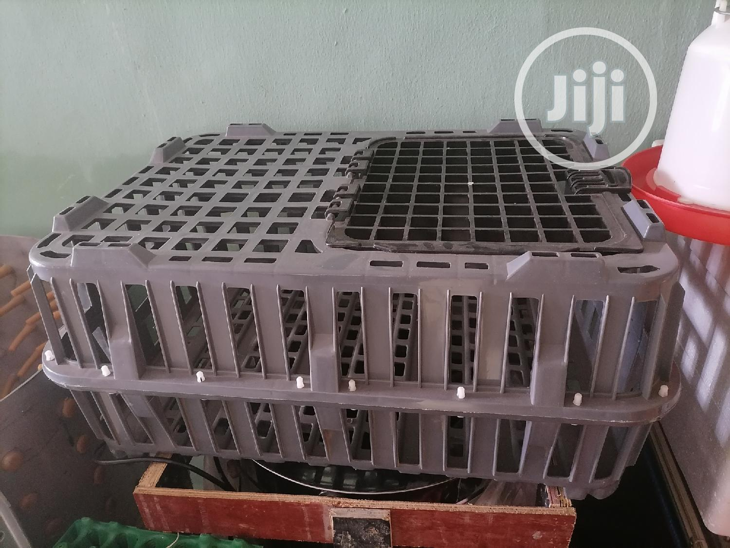 Birds Transport Crate Small Size