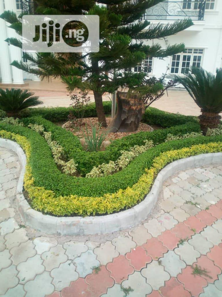 Land Scaping And Flowering | Landscaping & Gardening Services for sale in Kaduna / Kaduna State, Kaduna State, Nigeria