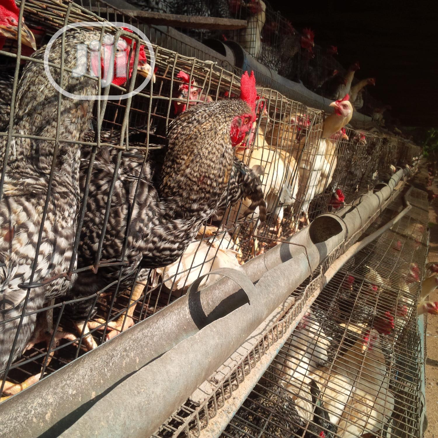 Poultry Cage | Farm Machinery & Equipment for sale in Ikorodu, Lagos State, Nigeria