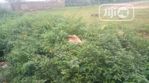 5084sqm Residential Land for Sale in Kaura   Land & Plots For Sale for sale in Abuja (FCT) State, Kaura