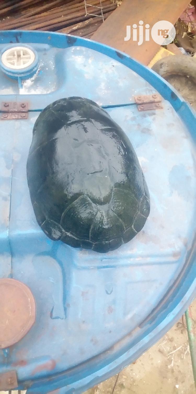 Archive: Sea Turtle