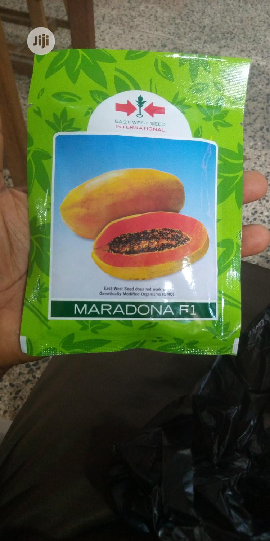 Maradonna Dwarf Pawpaw Seeds