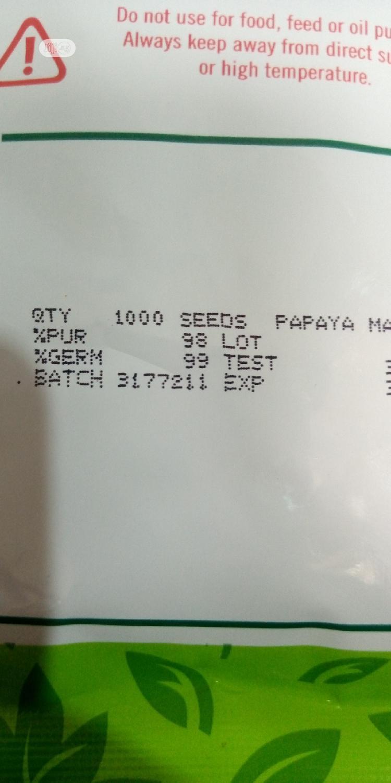 Maradonna Dwarf Pawpaw Seeds   Feeds, Supplements & Seeds for sale in Ibadan, Oyo State, Nigeria