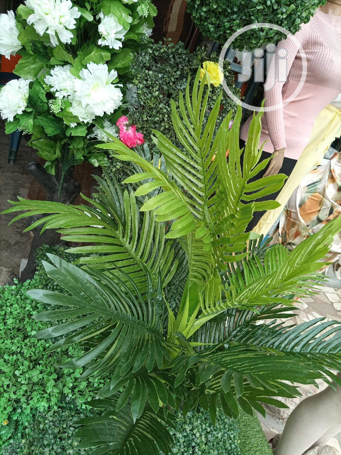 Beautify Your Houses With Quality Plans Tree | Garden for sale in Surulere, Lagos State, Nigeria