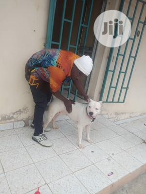 Kennel Assistant Needed | Manual Labour Jobs for sale in Edo State, Benin City