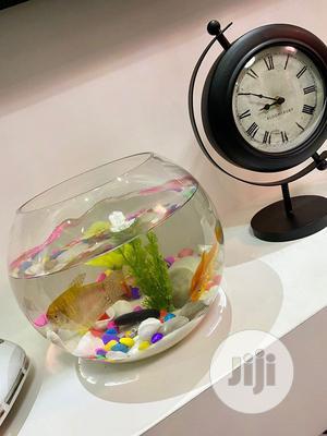 Luxury Fish Bowl | Fish for sale in Lagos State, Lekki