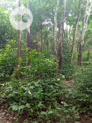500 Plots of Rubber Farm for Sale at Oguta | Land & Plots For Sale for sale in Imo State, Oguta