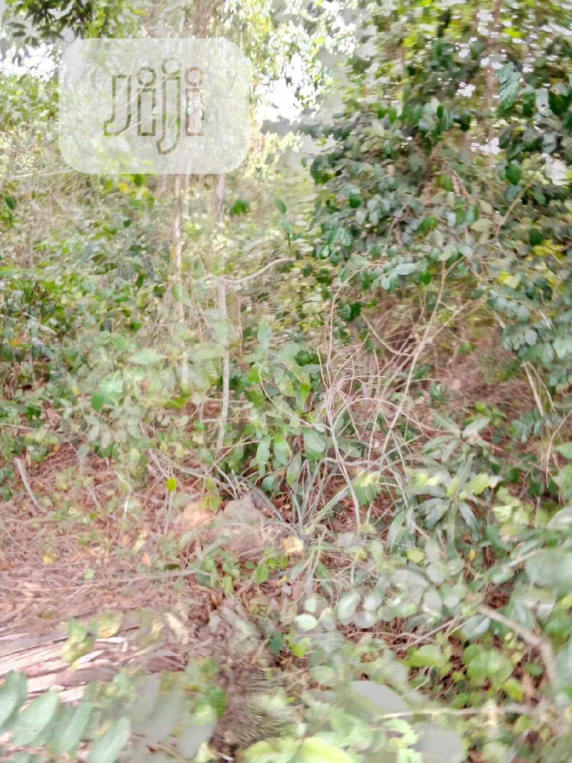Archive: A Plot Of Land For Sale At Idiroko,Ogun State