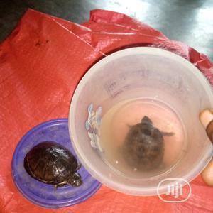 Aquarium Tortoise | Reptiles for sale in Lagos State, Surulere